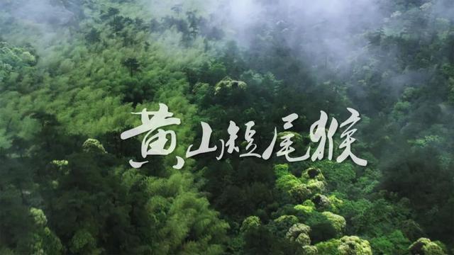 国广子行多语种译制中心完成俄语版《黄山短尾猴》制作,讲述鲜为人知的猴生百态
