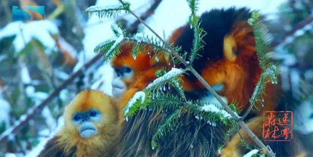 恐龙时代的传奇物种,古老神秘的原始森林,俄语版《迷雾森林》引发人文思考