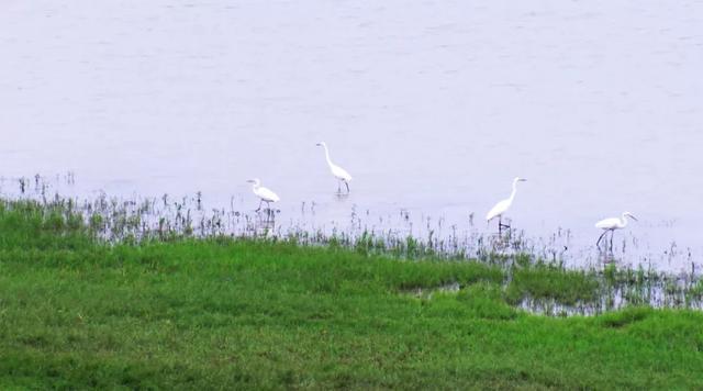 比你想象中更美!多语种译制俄语版《湿地生命》与自然对话,揭示湿地之于生命的意义