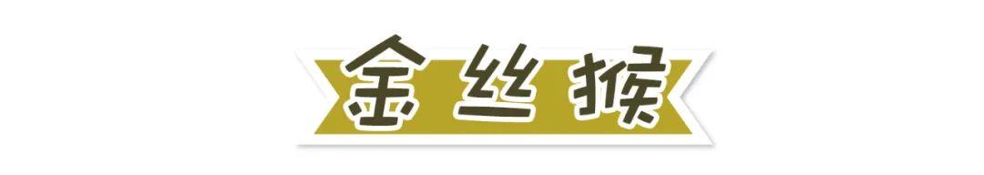 国际珍稀动物保护日,翻开<a href=http://www.cbmbj.com/multilanguage/Russian/ target=_blank class=infotextkey>俄语版</a>动物手册,看你珍稀动物知多少
