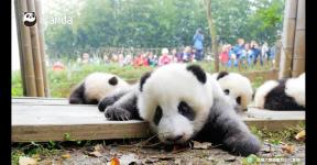 国际珍稀动物保护日,翻开俄语版动物手册,看你珍稀动物知多少?