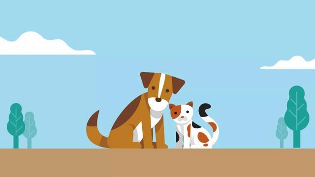疫情之下,与爱同行 | 国广子行传媒请专业机构共同救助流浪狗