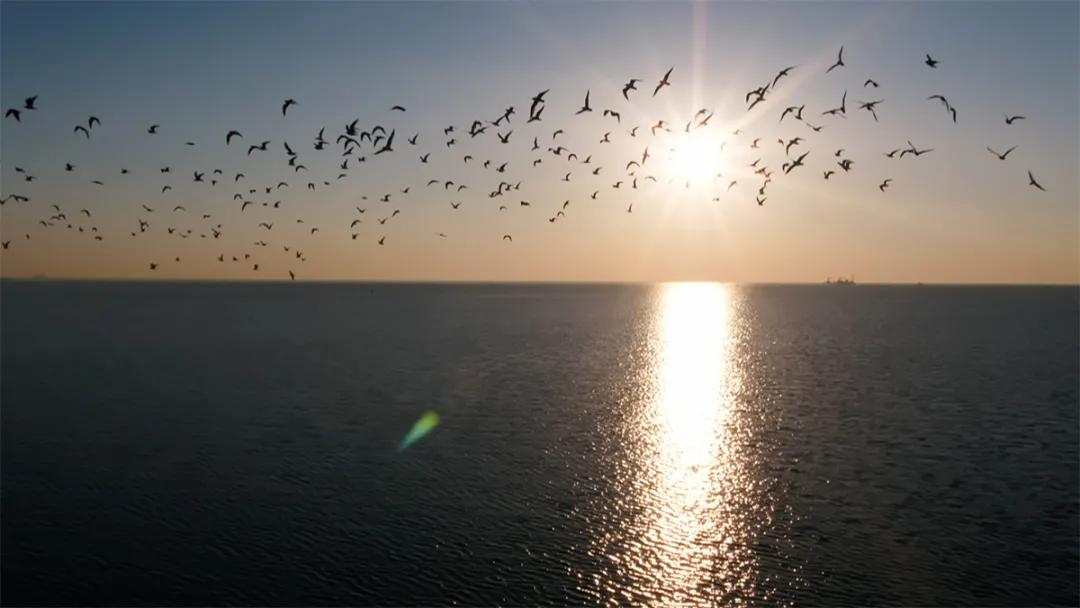 世界海洋日 | 发现海洋之美,一起守护这片蔚蓝之境